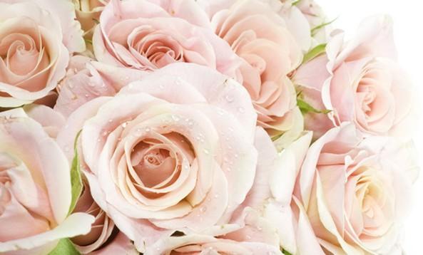 rose flower00